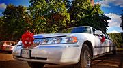 Ilgas 14 vietų limuzinas vestuvėms Alytuje