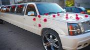 Vestuviniai limuzino papuošimai